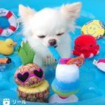 インスタグラム「リール」子犬の動画
